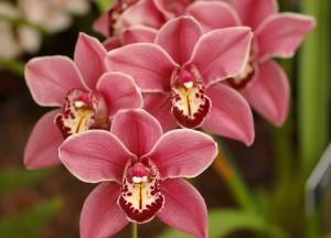 Bournemouths Orchid Fair and Show