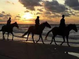 horseriding in dorset