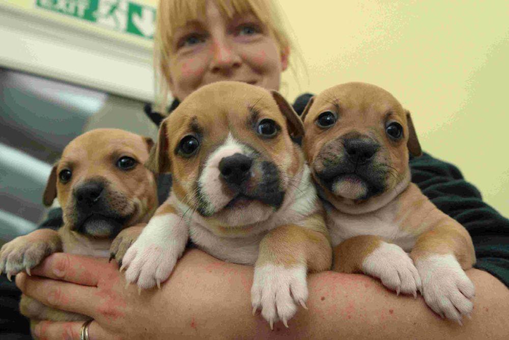 Margaret-Green-Animal-Rescue-Centre