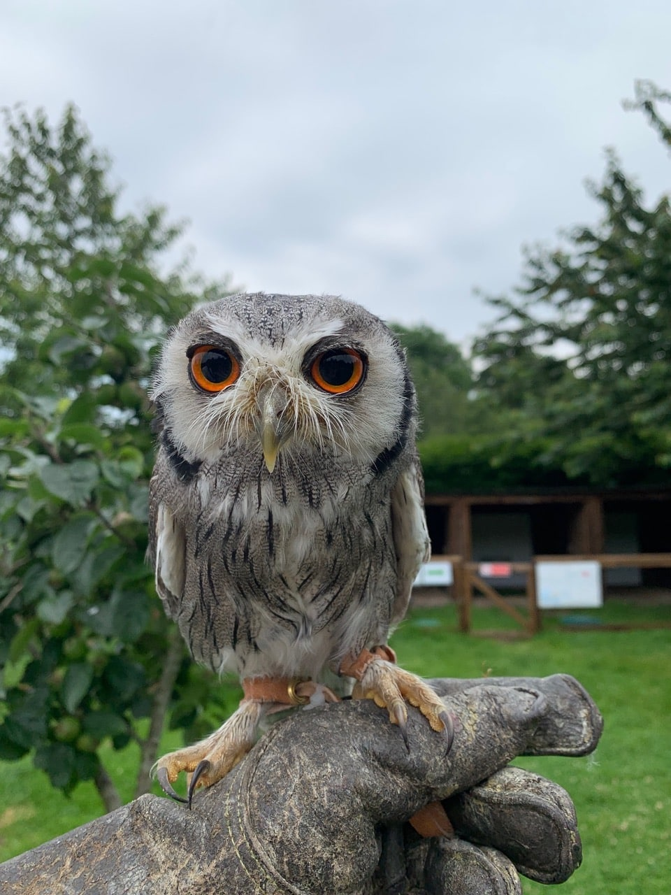 day out doing falconry